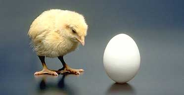 Congressional Chicken or Egg?